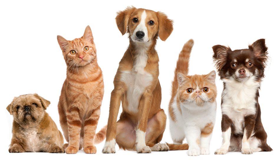 Pet Friendly Drug Rehab - Turning Point Treatment Center, Inc